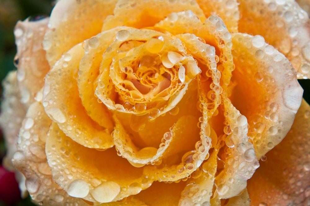 Blumen, Blüten, Blätter 01
