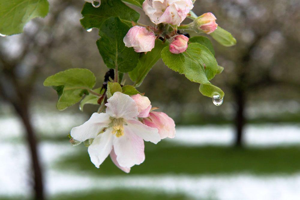 Blumen, Blüten, Blätter 05