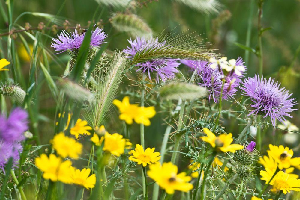 Blumen, Blüten, Blätter 06