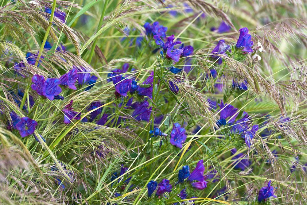 Blumen, Blüten, Blätter 07