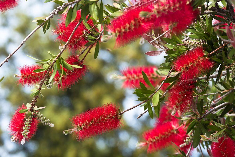 Blumen, Blüten, Blätter 08