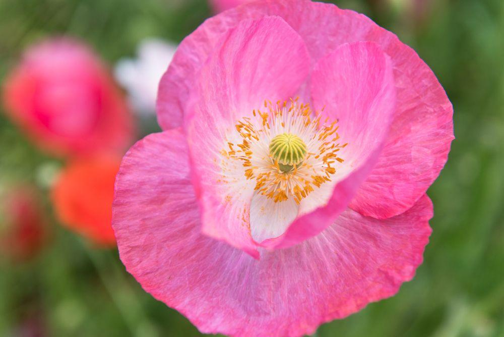 Blumen, Blüten, Blätter 09