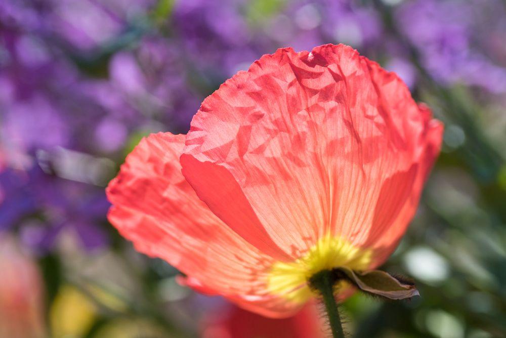 Blumen, Blüten, Blätter 10
