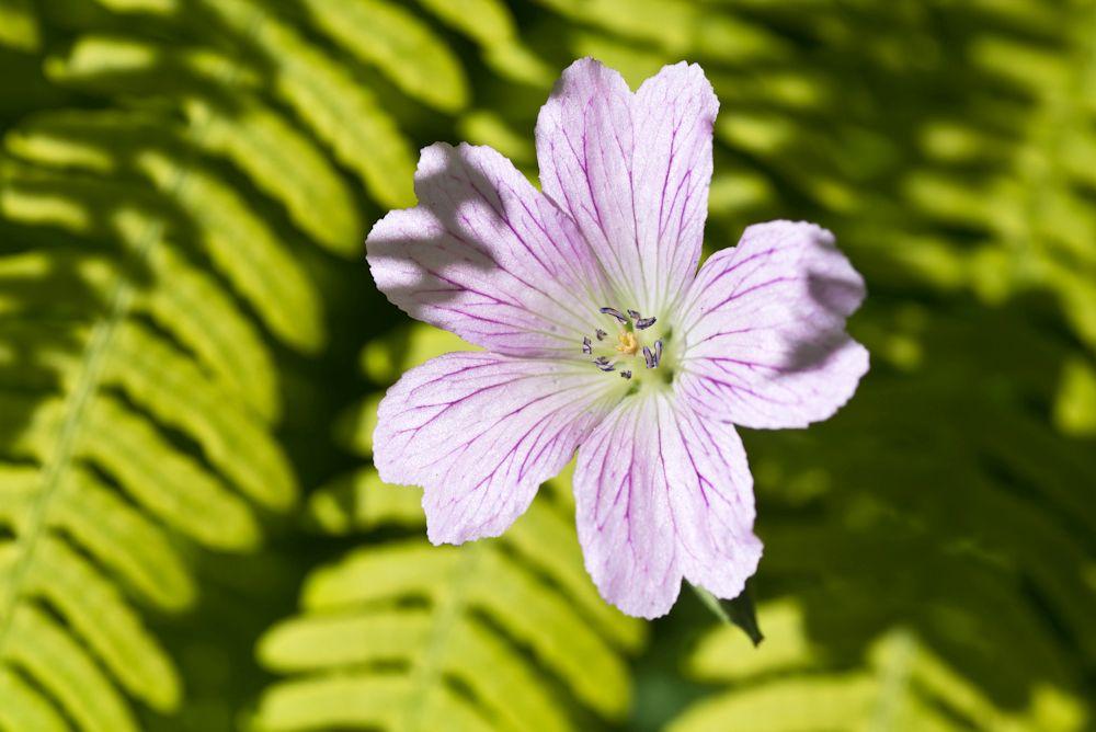 Blumen, Blüten, Blätter 13