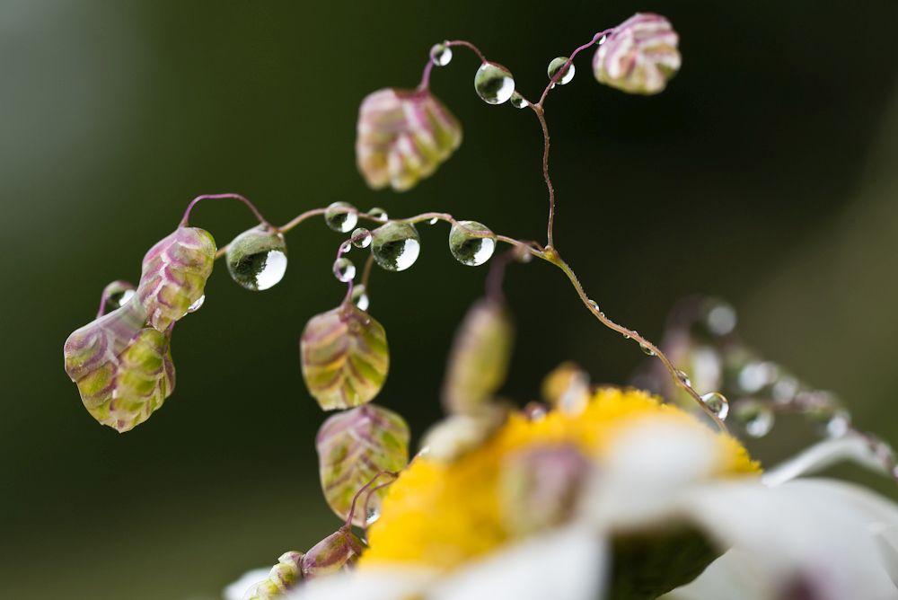 Blumen, Blüten, Blätter 18