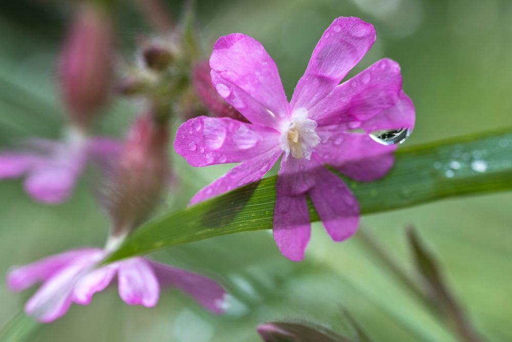 Blumen, Blüten, Blätter 20