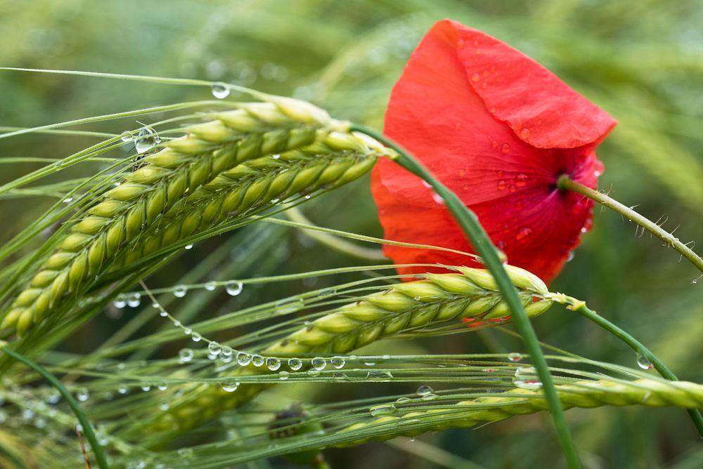 Blumen, Blüten, Blätter 22