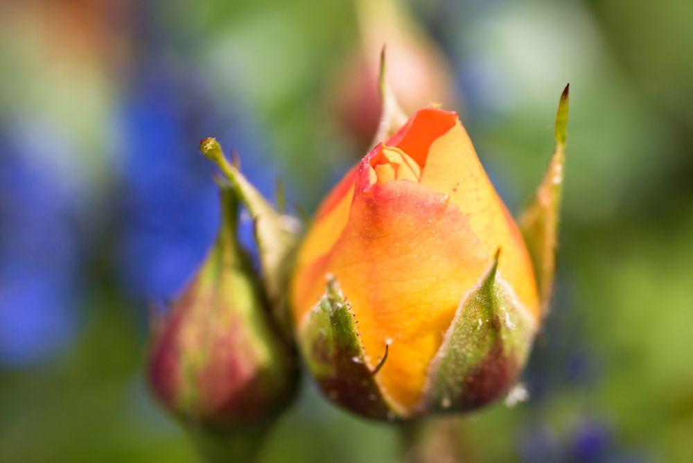 Blumen, Blüten, Blätter 26