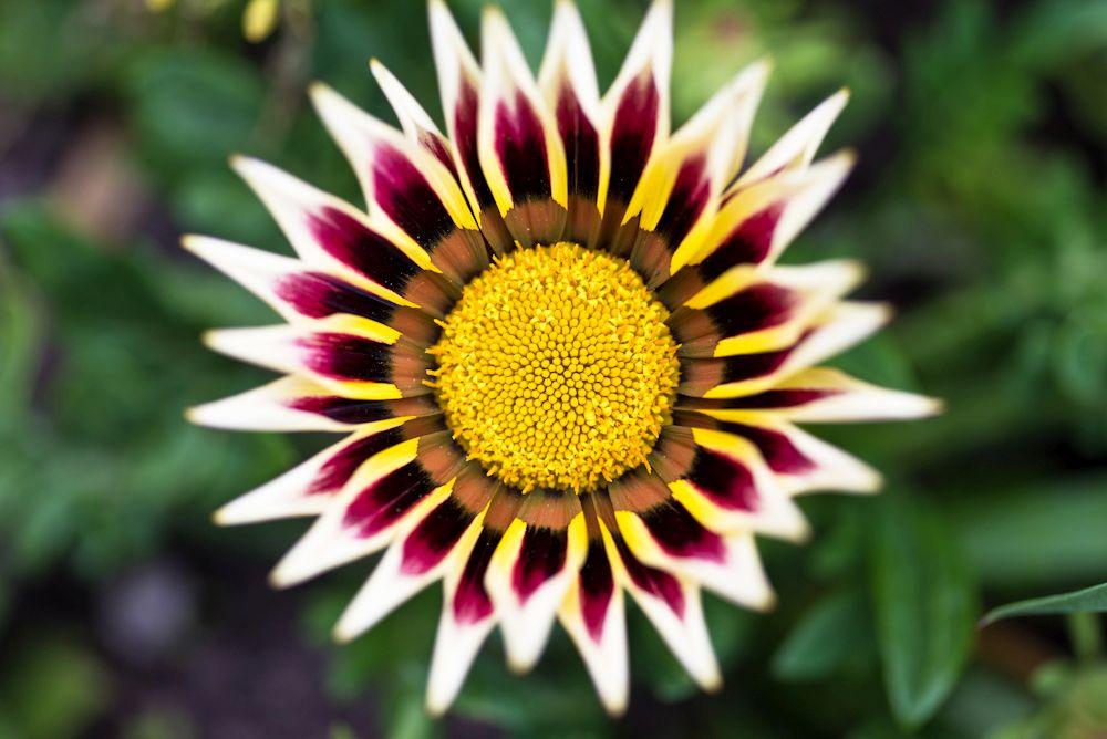 Blumen, Blüten, Blätter 27