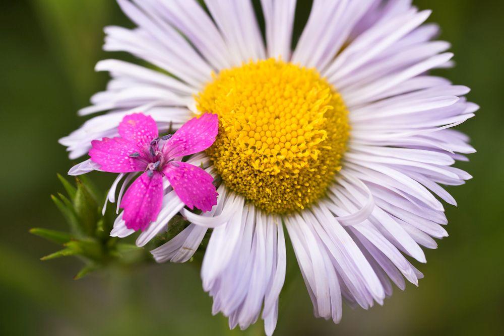 Blumen, Blüten, Blätter 28