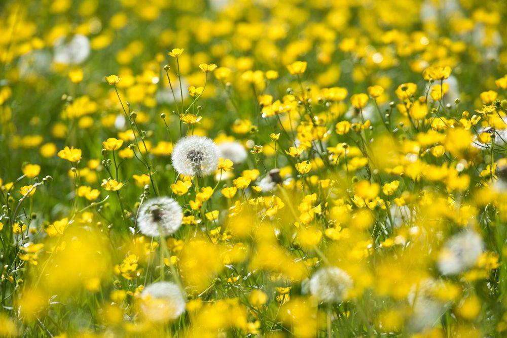 Blumen, Blüten, Blätter 31