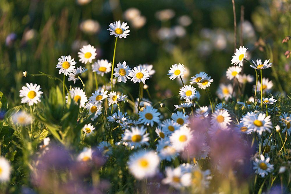 Blumen, Blüten, Blätter 32