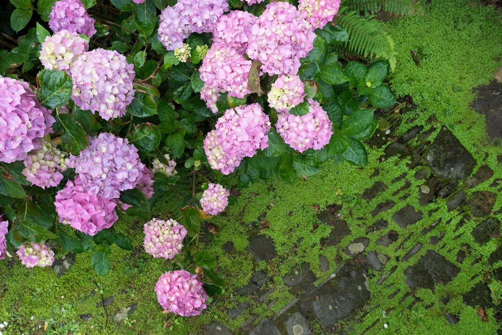 Blumen, Blüten, Blätter 34