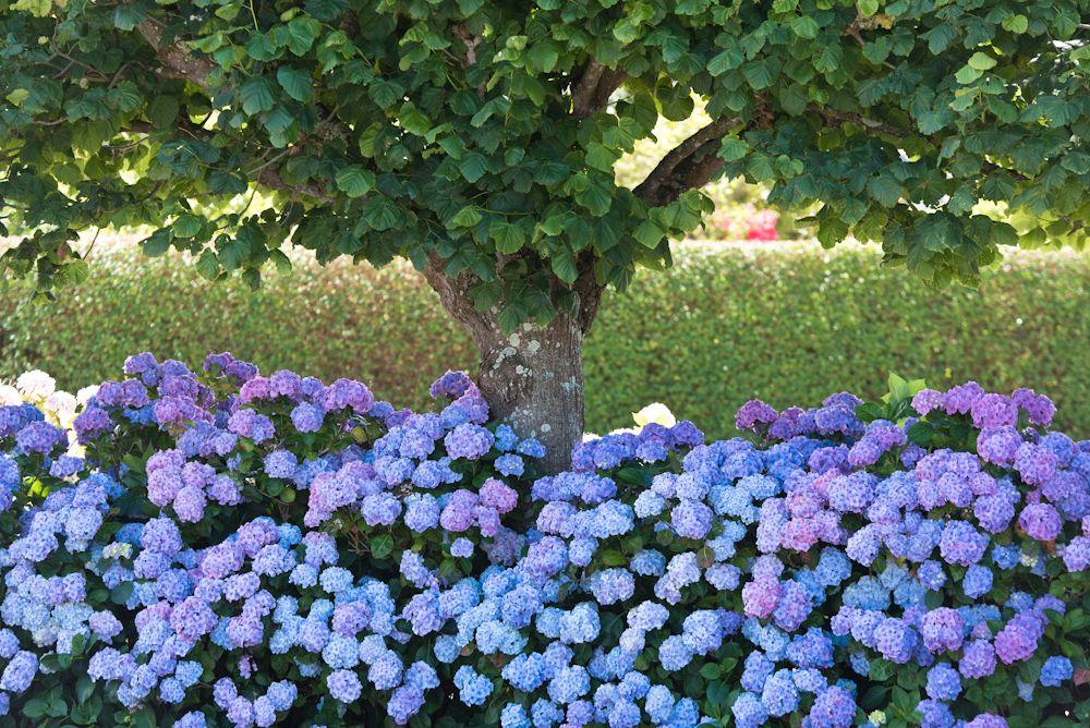 Blumen, Blüten, Blätter 35