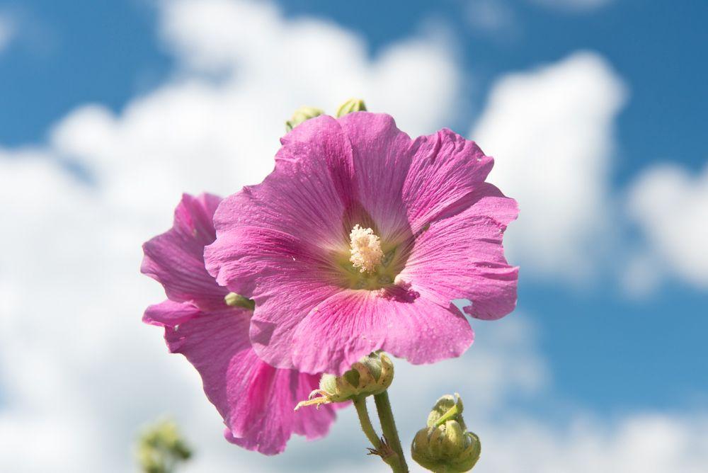 Blumen, Blüten, Blätter 36