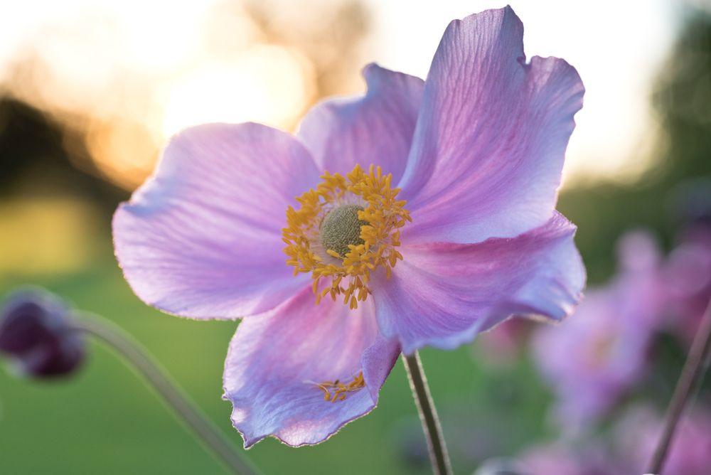 Blumen, Blüten, Blätter 37