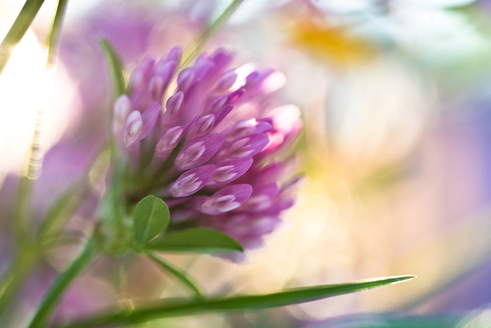 Blumen, Blüten, Blätter 38