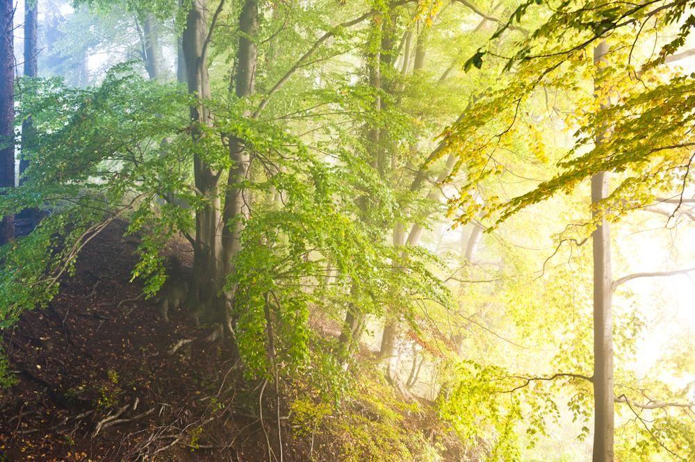 Wald & Bäume 01