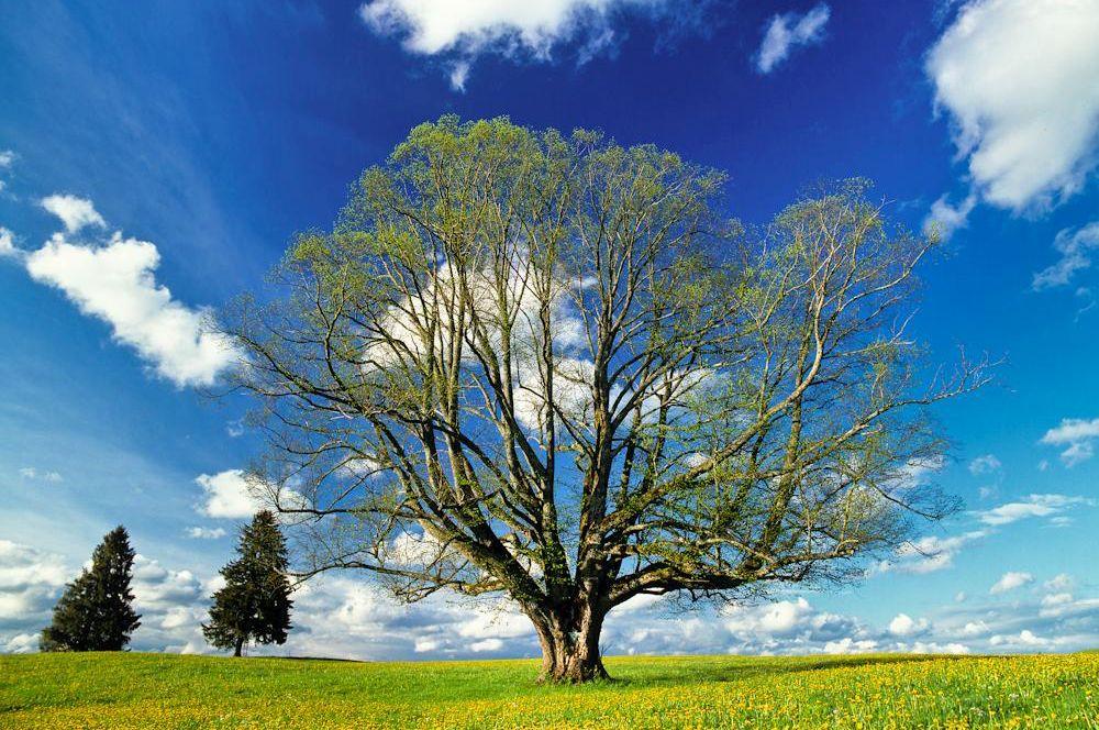 Wald & Bäume 03