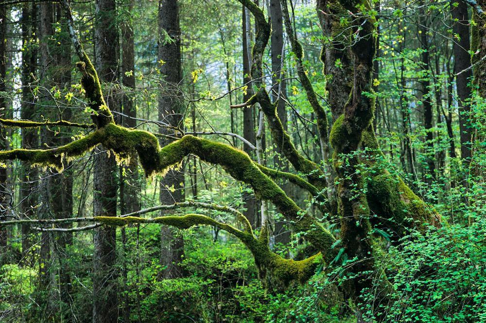 Wald & Bäume 05
