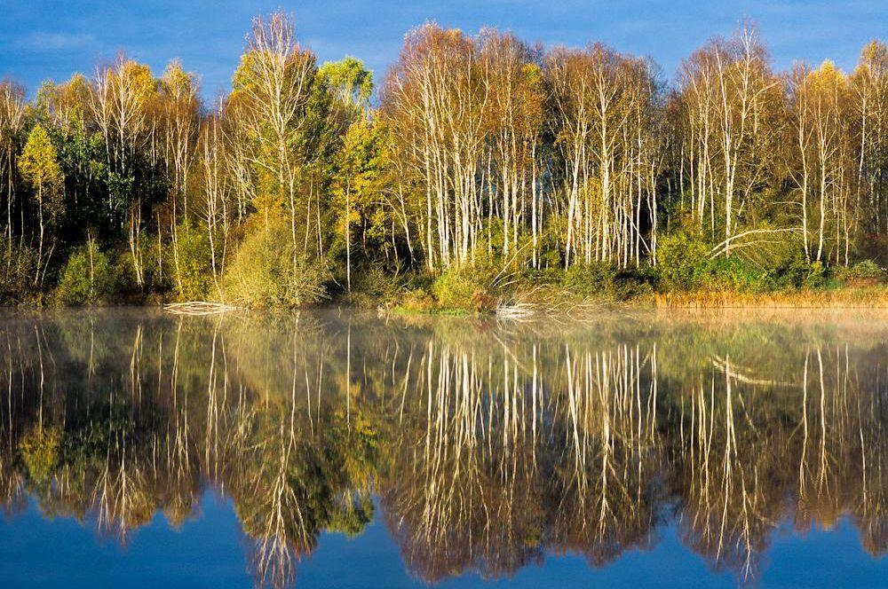 Wald & Bäume 09