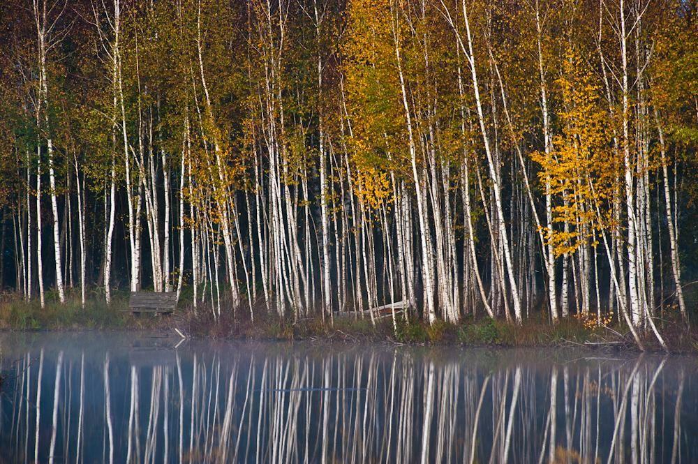 Wald & Bäume 10