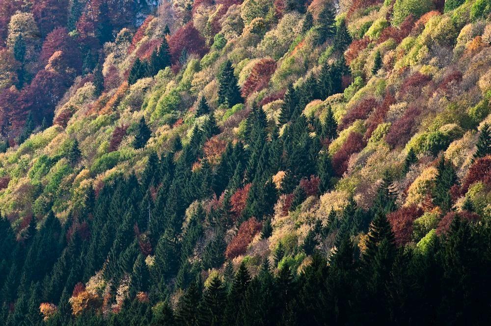 Wald & Bäume 12