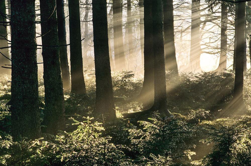 Wald & Bäume 13