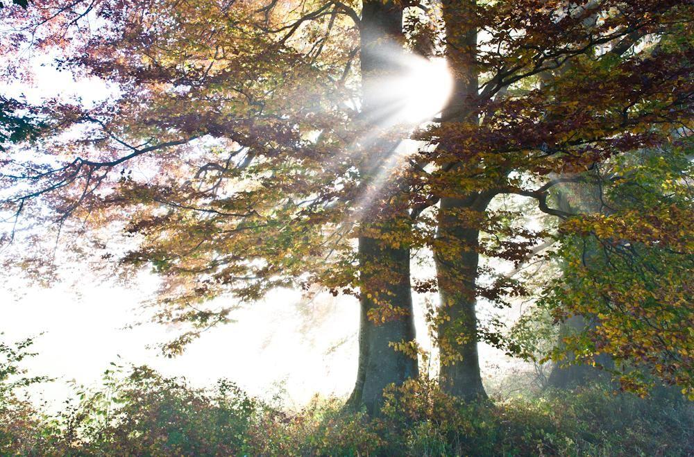 Wald & Bäume 14
