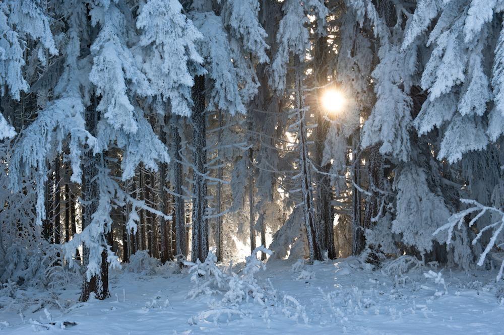 Wald & Bäume 18