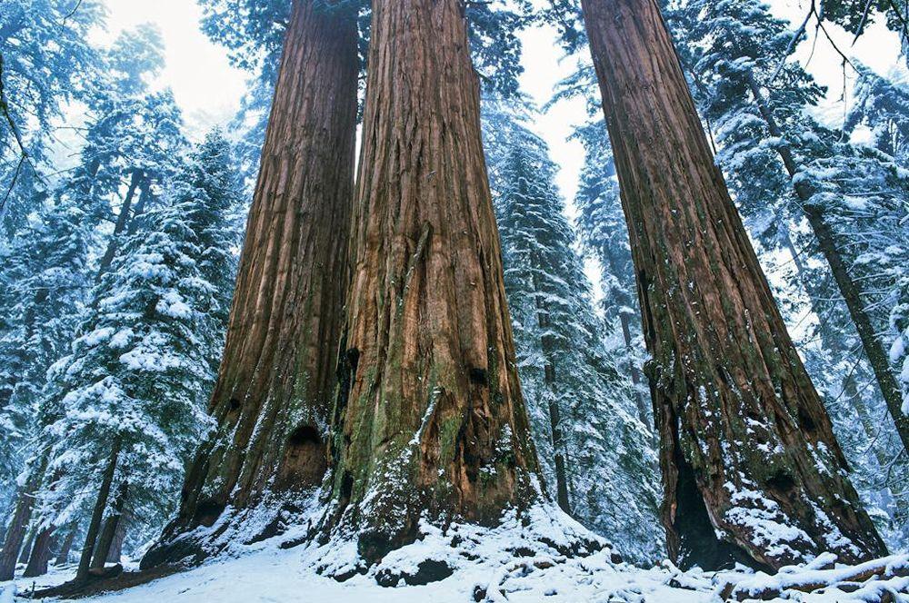 Wald & Bäume 20